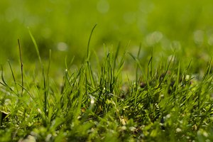 Grassy image for your website