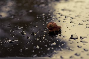 A Snail's Escape