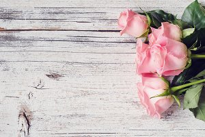 Pink roses, vintage background