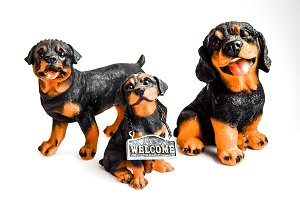 Family of Rottweilers