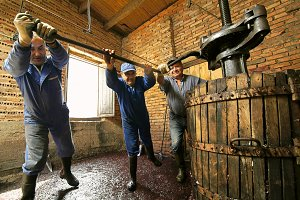 farmers working with winepress