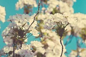 iseeyouflower spring blossom