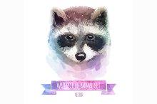 Watercolor set of animals   Raccoon