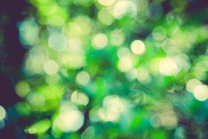 iseeyouphoto forestbokeh 3