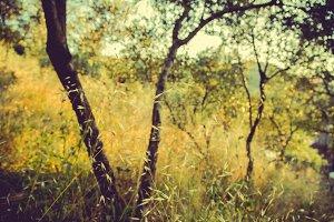 iseeyouphoto summergrass 1