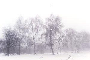 Park in wintertime