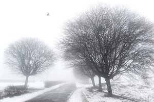 Park in winter foggy day