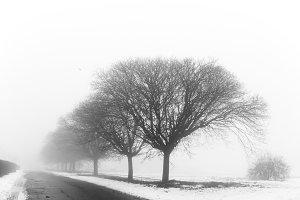 Fog in winter park