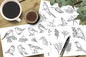 Sketch birds. Vector set.