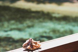 Shell in sunshine.