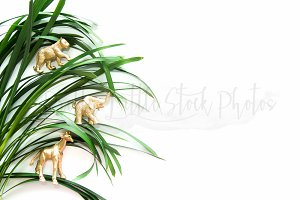 PLSP #363 Styled Desktop Stock Photo
