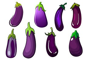 Purple eggplant vegetables
