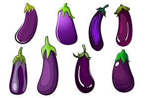 Purple eggplant vegetables