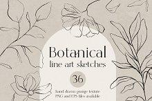 Botanical line art sketches