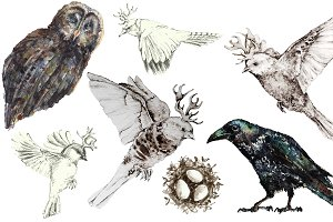 Birds in watercolor and pencil