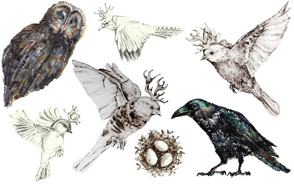 Birds in watercolor and pencil in Illustrations