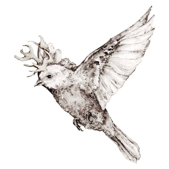 Birds in watercolor and pencil in Illustrations - product preview 3