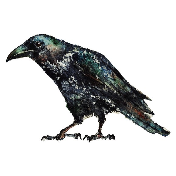 Birds in watercolor and pencil in Illustrations - product preview 4