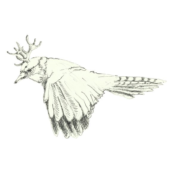 Birds in watercolor and pencil in Illustrations - product preview 6