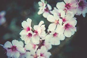 iseeyouflower pinkblossom