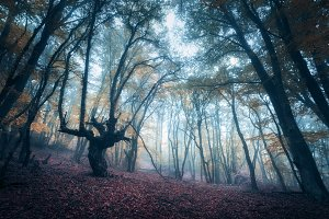 Scary forest in fog in autumn