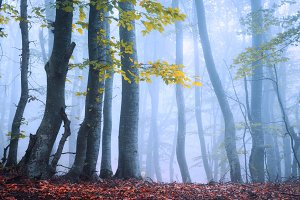 Fairy forest in fog in autumn