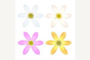 Six Petal Flower.