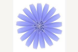 Blue flower.
