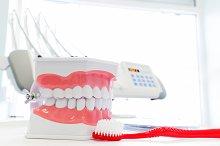 Dental jaw model.