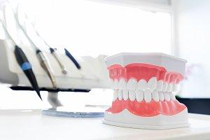 Dental jaw model close-up.