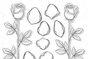 Set sketch rose and petals