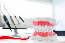 Toothbrush and dental jaw model.