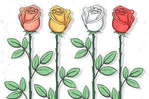 Set sketch colored roses. Flowers