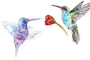 Hummingbirds and flower