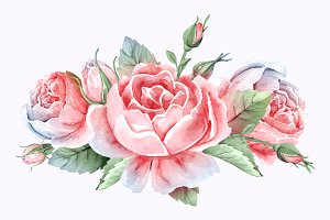 Rose flower watercolor illustration