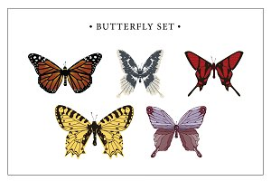 Butterfly Set Vector Postcard Editio
