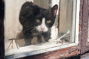 Cat looks out of an old window