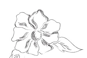 flower, sketch, vector