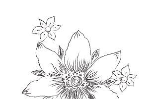 flower, sketch