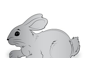 Rabbit, vector, illustration