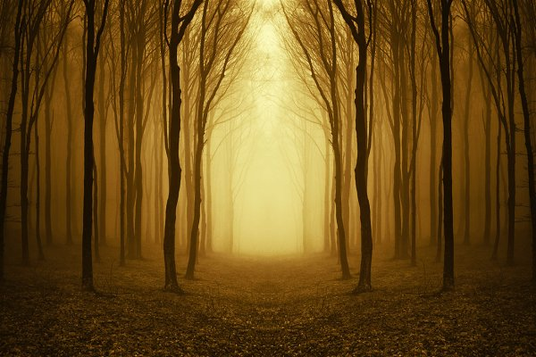 Path through surreal forest with fo…