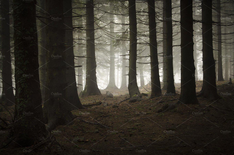 Dark Pine Tree Mountain Forest Nature Photos Creative