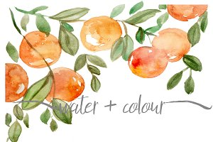 watercolor oranges border